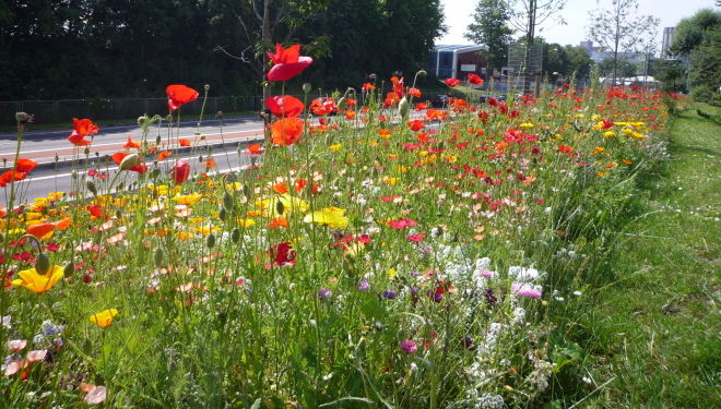 Flower meadow alongside M32 motorway in Bristol
