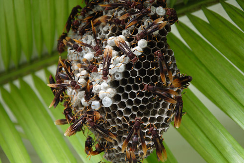 wasp-nest-article