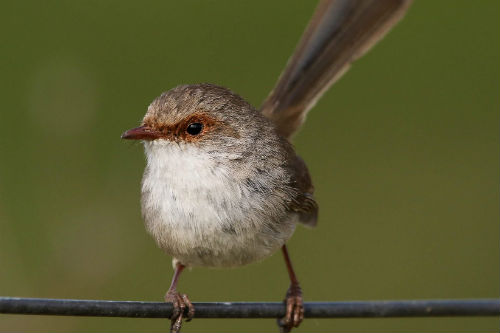 wren-on-wire-article