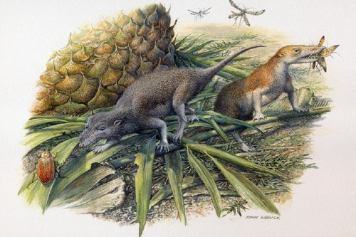 Ancient first mammals tiny teeth article