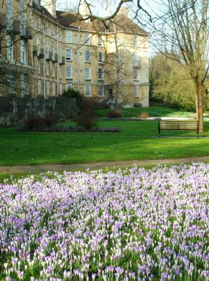 Crocuses at Manor Hall