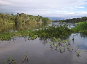 Floodplain lake in the central Amazon basin