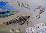 Reconstructon of a eurypterid chasing early armoured fish.
