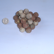 Some of the musket balls discovered at the dig