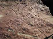 Fossil footprints on a 318-million-year-old dry riverbed