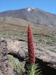 Pico del Teide is part of Tenerife's central volcanic complex and one of VUELCO's target volcanoes. The complex underwent a period of unrest in 2004/5.