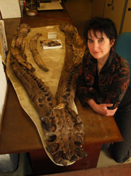 Dr Judyth Sassoon with the lower jaw of the Westbury pliosaur