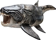 Sculptured reconstruction of the placoderm Dunkleosteus
