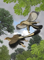 An artist's impression of what the Archaeopteryx lithographica would have looked like in flight