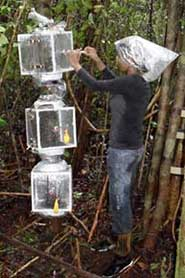Sunitha Pangala sampling methane emissions from trees in a peat swamp in Borneo