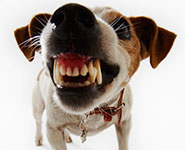 A close-up of a snarling dog's mouth, baring teeth