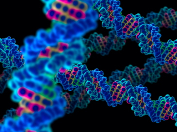 A DNA molecule in 3D