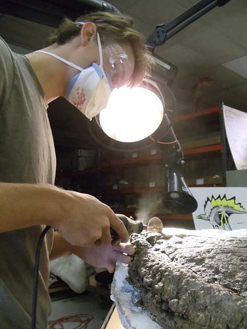 Image of Evan Saitta sawing away a sample of a Stegosaurus plate for thin sectioning (Credit: The Judith River Dinosaur Institute)