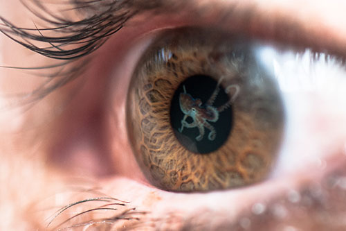 Image of an octopus reflected in an eye