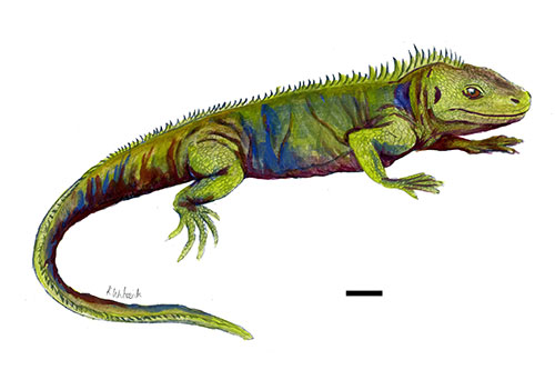 Image of a reconstruction of what Clevosaurus sectumsemper may have looked like.