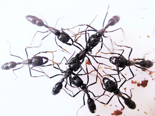 Image of ants interacting