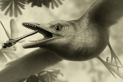 Image of a reconstruction of how the bird might have looked, based on current evidence