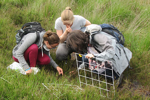 Image of fieldwork in action: identifying a plant before doing a flower count