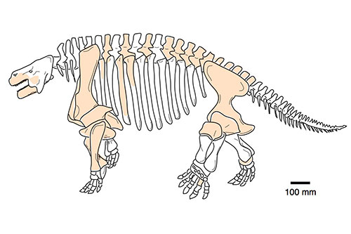 Image of a pareiasaur