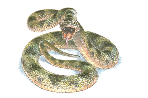 Image of an artist's impression of the snake