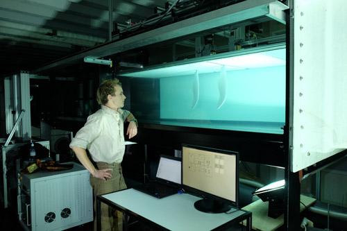 August Plesiosaurs Swimming Style News University Of Bristol