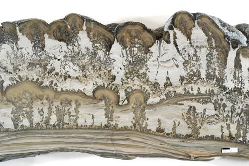 Cotham Marble