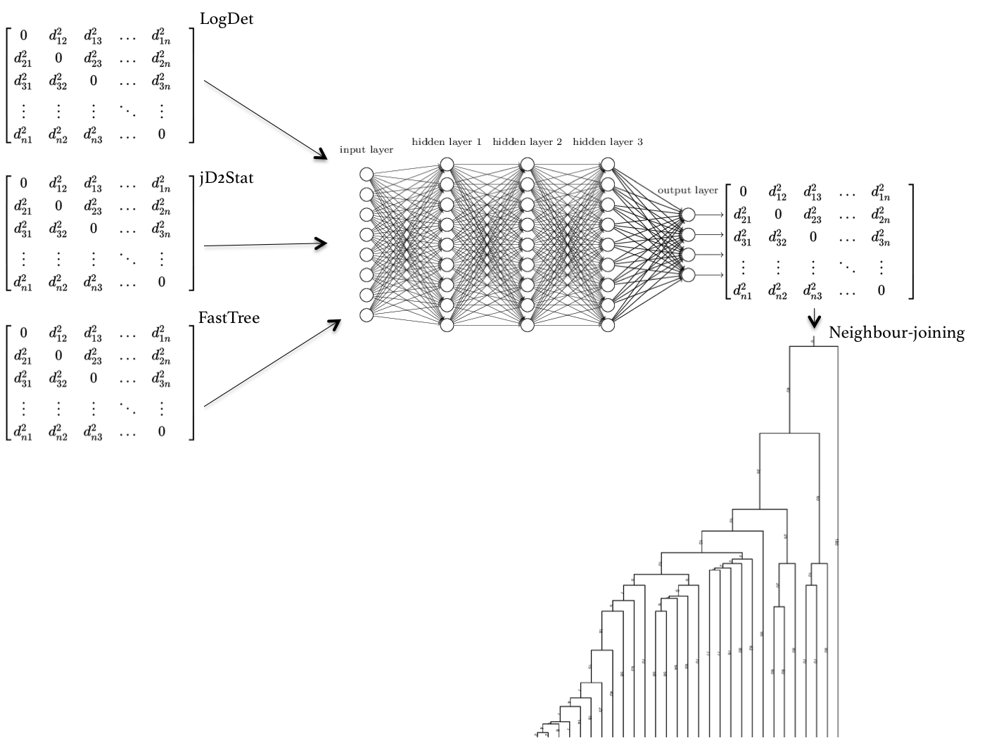 Developing a deep learning method for phylogenomics | Jean