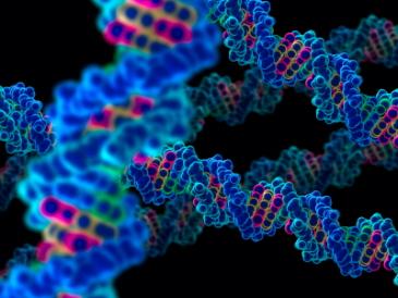 A DNA molecule in 3D
