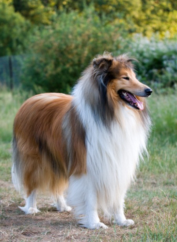 September New Study Shows Impact Of Movies On Dog Breed Popularity News University Of Bristol