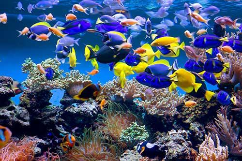 March commotion in the ocean news university of bristol for Immagini coralli marini