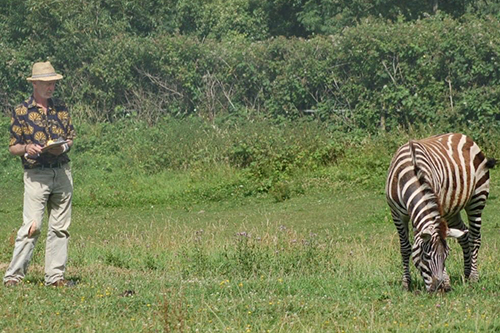 February: Zebra stripes | News | University of Bristol