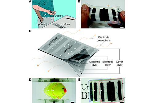 Des chercheurs de Bristol ont mis au point des robots ressemblant à des peaux extensibles qui peuvent être enroulés et mis dans votre poche