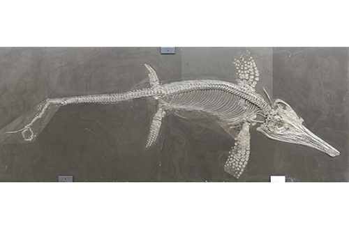Boom and Bust for Ancient Sea Dragons