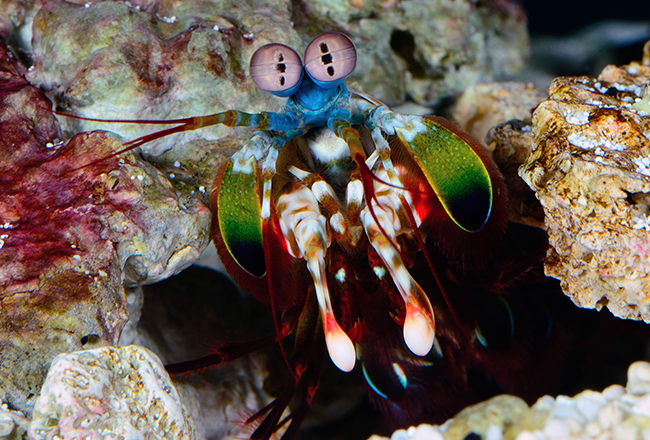 life-in-colour-body-image-shrimp