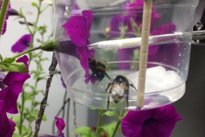 Feeling a spark: flowers release their perfume in response to electricity of a bee's touch