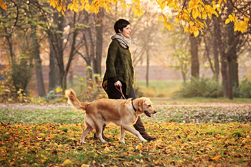 Image of a woman walking a dog in a park